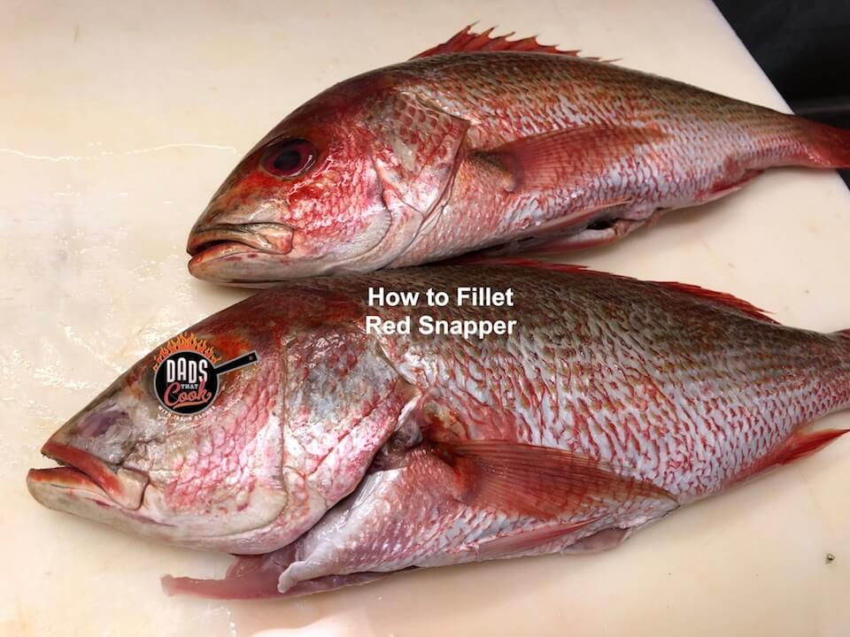 How to Fillet a Fish – Red Snapper!